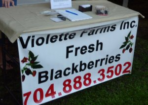 Violette Farms blackberries - they sell out fast!