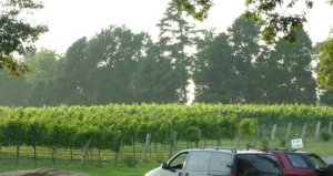 Daveste Vineyard