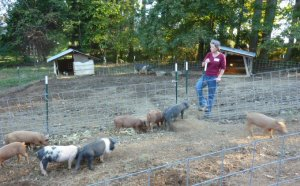Natalie with the piglets