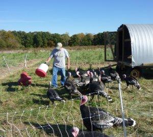 Carlea Farms Farmer Carl Wagner with his Bronze turkeys