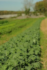 The Wagners run a healthy farm - check out these greens!