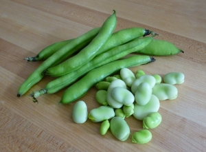 Fava beans removed from pod