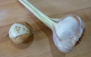 Carlea Farms garlic and New Town Farms Waxhalia onion