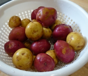 Beautiful potatoes from my Carlea Farms CSA