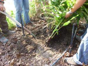 Jane and Susan start digging...