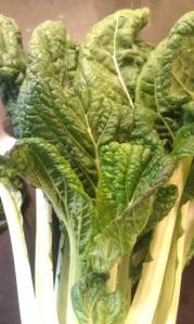 Komatsuna from Hinson Farms
