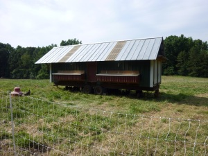 The laying hen house.